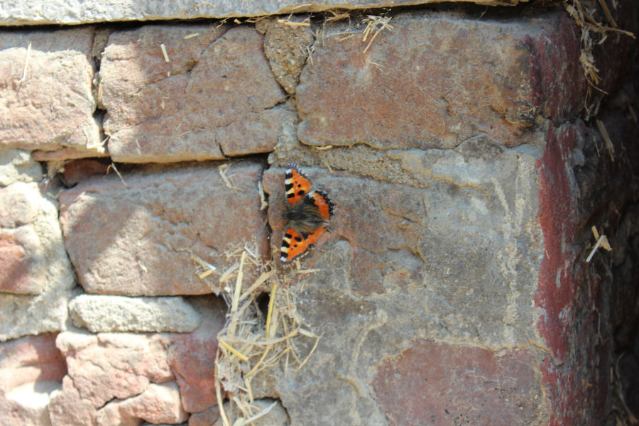 Schmetterling auf Mauer