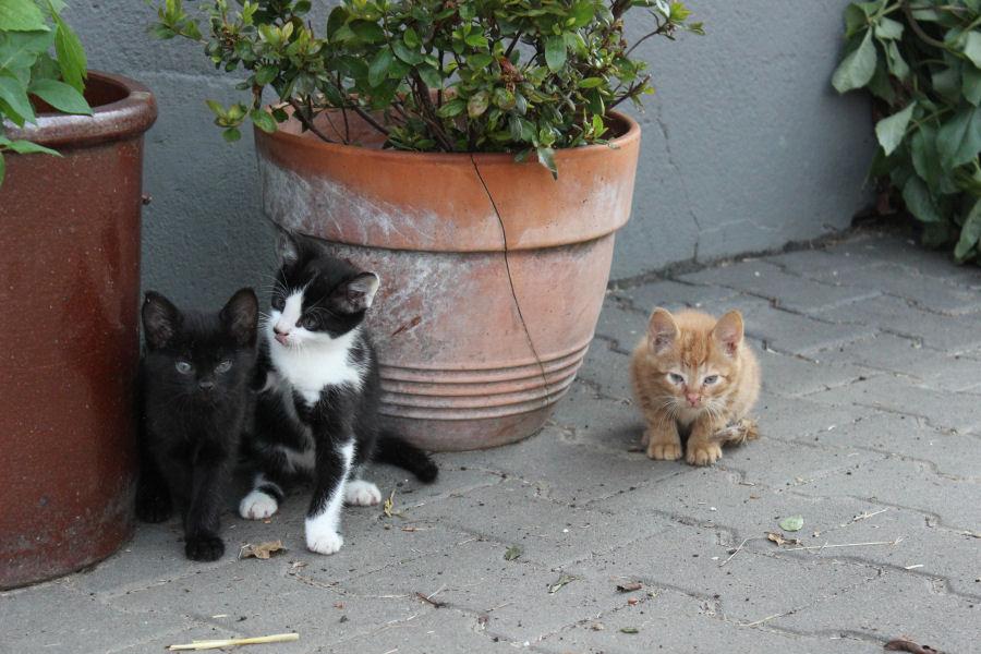 drei junge Katzen